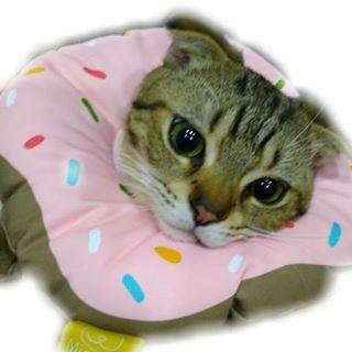 一隻花捲貓