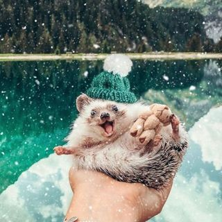 The World's Cutest Adventurers