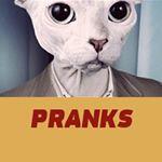 Citizen Cat Pranks
