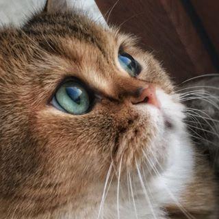 Jupiter The Cat