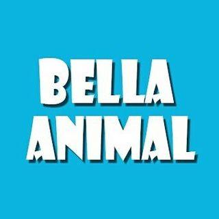 Bella Animal