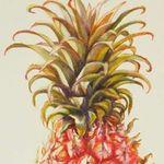 Pineapple Co.