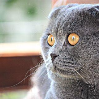 Boss The Cat (Bossulica)