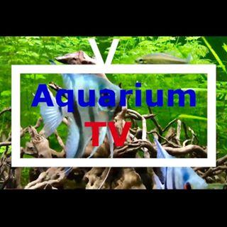 Aquarium TV