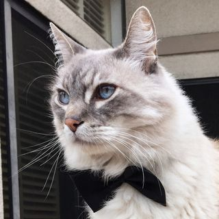 I'm Stanley, A Gentlemanly Cat