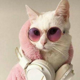 Viral cat content