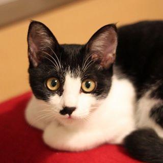家猫ソラちゃん♂: 元保護猫