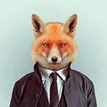 Fox Corvus