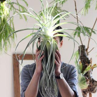 Akira 植物のある暮らし