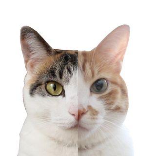もしも猫が喋ったら