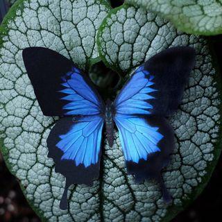 Moth & Myth
