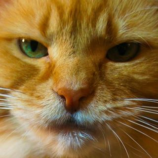 LunaTurd Cat 💩😸