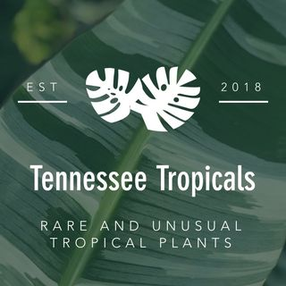 Tennessee Tropicals 🌴