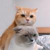 ชิเอลแมวมึน 😺