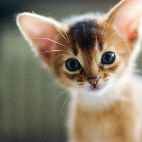 meowmm13