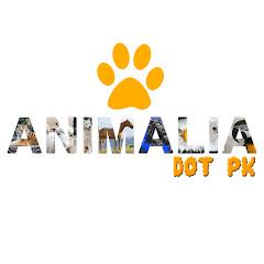 Animalia Dot Pk