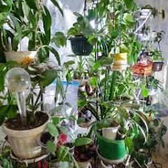 мир цветов и растений
