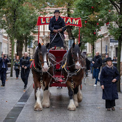 SHIRE AND CARRIAGE HORSES Official