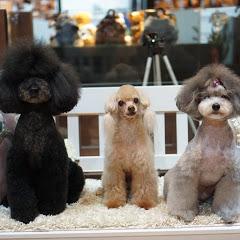 Honey&Dogs 허니앤독스