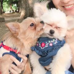 こむぎとこまちと子犬たち【ミックス犬ファミリー】
