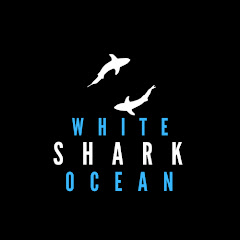 White Shark Ocean