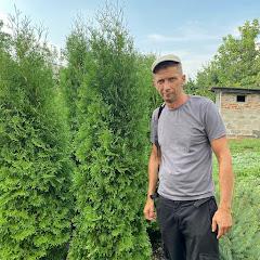 Евгений Филимонов - Выращивание хвойных растений