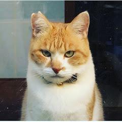 元野良猫チャチャとR me