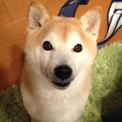柴犬シバタ