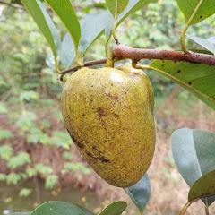 Fruit, Food & Animal