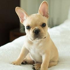 DOG LOVERS ♥