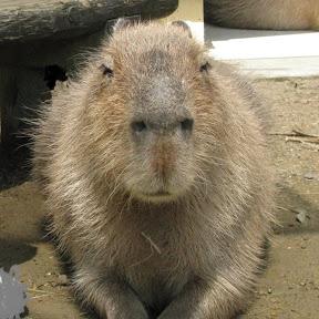 Capybara Research