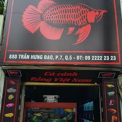 Cá Rồng Việt Nam - Arowana