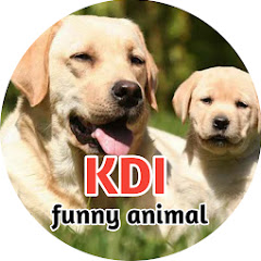 KDI funny animal