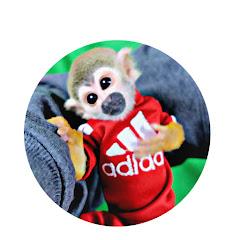 Ollie The Monkey