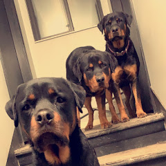 The Rotty Channel