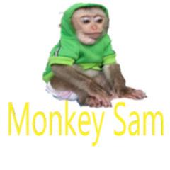 Monkey sam