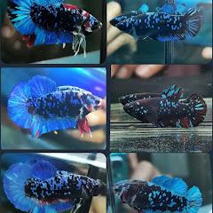 Top Fish 7