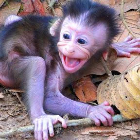 Monkey Baby Crying