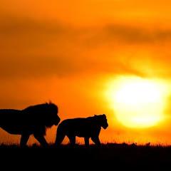 Maasai Sightings
