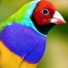 BISWAS BIRDS