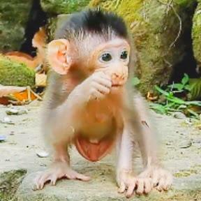 Baby Monkey Cry
