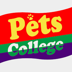 Pets College