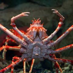 Gamer Crab
