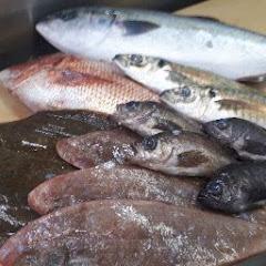お魚調理チャンネル魚のさばき方解説!つなきマン