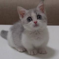 쥐라기냥Jurassic Cat