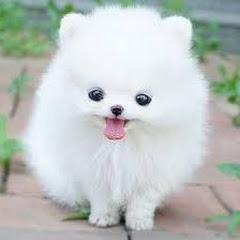 Cute Pets FunTube