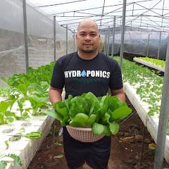 J&Gs backyard lettuce
