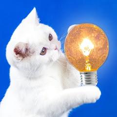 Proste Pomysły — Simple Ideas