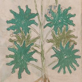 Voynich Manuscript Research
