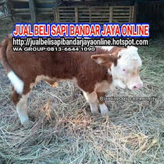 JUAL BELI SAPI BANDARJAYA ONLINE